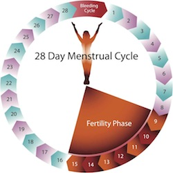 28 day menstrual cycle diagram small